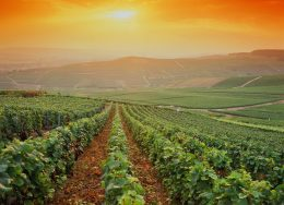 champagne-vineyards-france-cr-getty