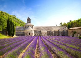 senanque-abbey-lavender-cr-getty